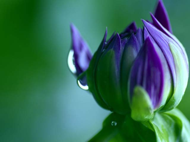Drops Nature Flower Up Bud Close Rainbow Desktop Backgrounds