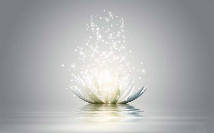 lotus_shining