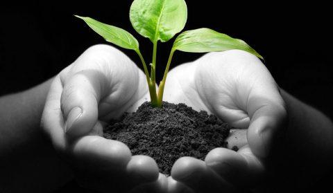 plant_hands
