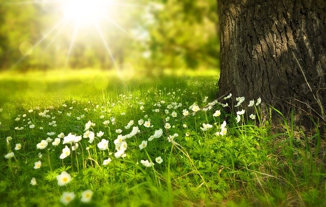 spring-forest-amanamana