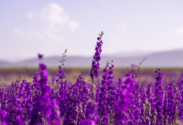 flowers-5383054_1280
